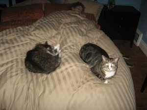 Kitties in my bed!